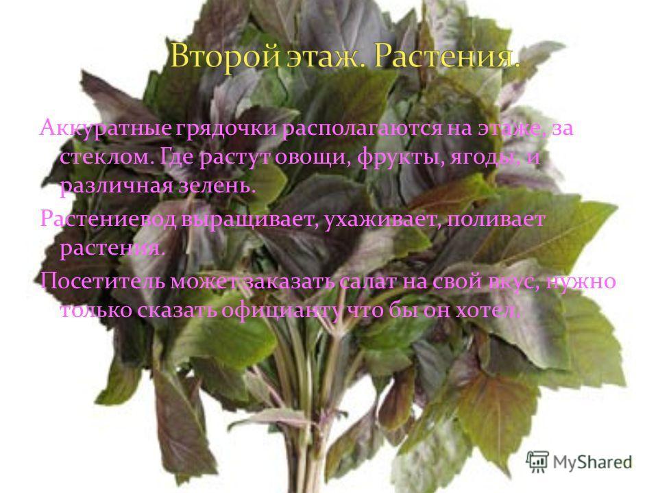 24 Аккуратные грядочки располагаются на этаже, за стеклом. Где растут овощи, фрукты, ягоды, и различная зелень. Растениевод выращивает, ухаживает, поливает растения. Посетитель может заказать салат на свой вкус, нужно только сказать официанту что бы