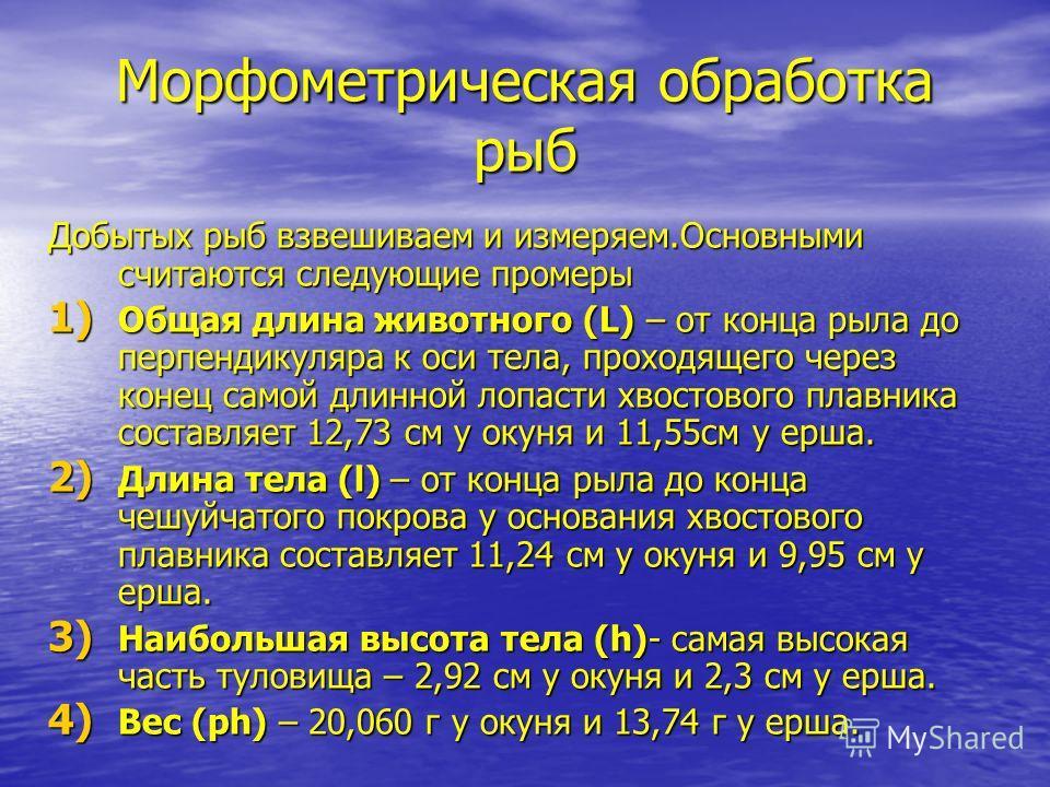 Морфометрическая обработка рыб Добытых рыб взвешиваем и измеряем.Основными считаются следующие промеры 1) Общая длина животного (L) – от конца рыла до перпендикуляра к оси тела, проходящего через конец самой длинной лопасти хвостового плавника состав