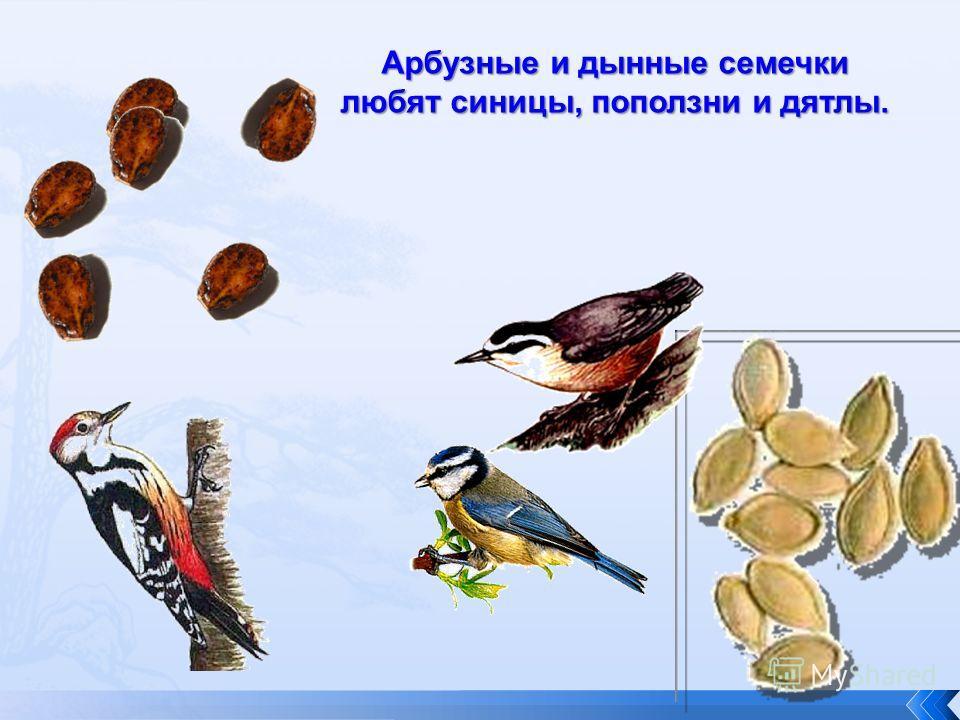 Арбузные и дынные семечки любят синицы, поползни и дятлы.