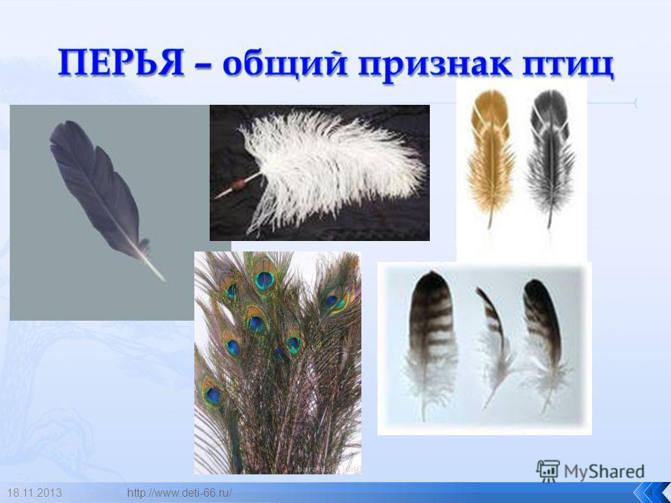 18.11.2013http://www.deti-66.ru/4
