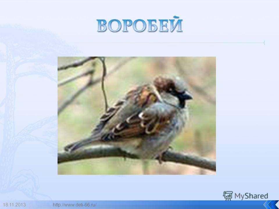18.11.2013http://www.deti-66.ru/8