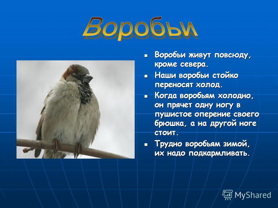 """Презентация на тему: """"Зимующие птицы. Всякая птица своим носом сыта Всякая птица своим носом сыта Каждая птица летит в свою стор"""