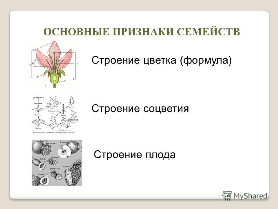 ОСНОВНЫЕ ПРИЗНАКИ СЕМЕЙСТВ Строение цветка (формула) Строение соцветия Строение плода