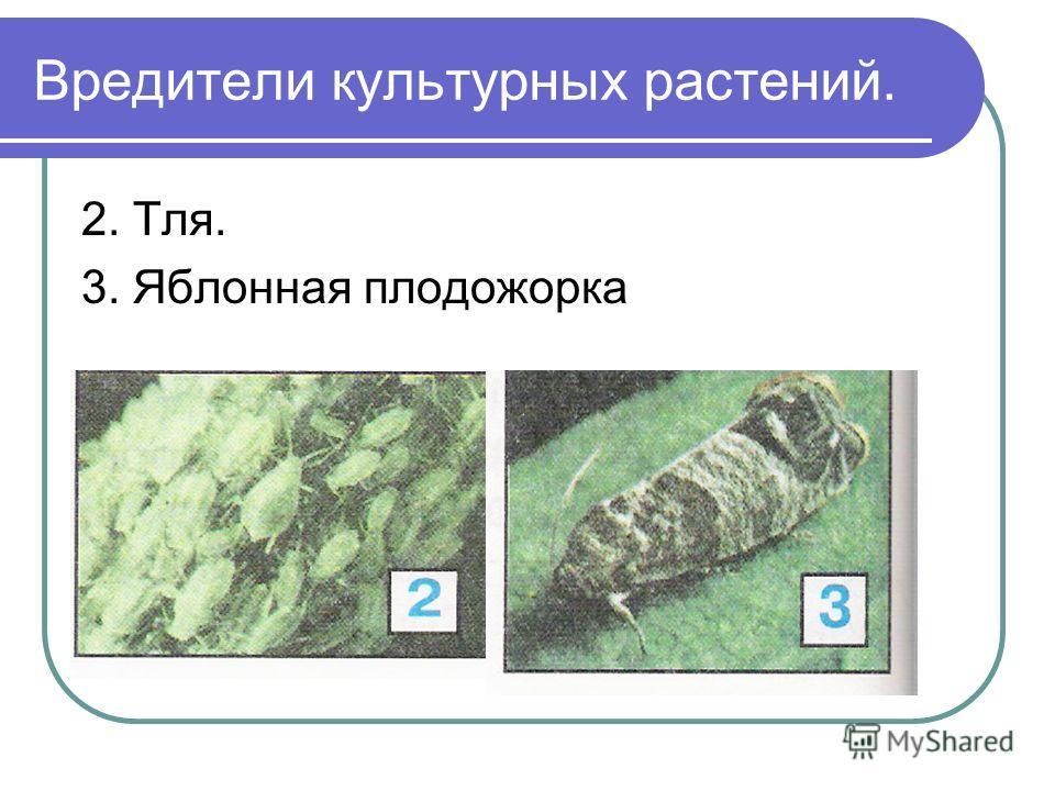 Вредители культурных растений. 2. Тля. 3. Яблонная плодожорка