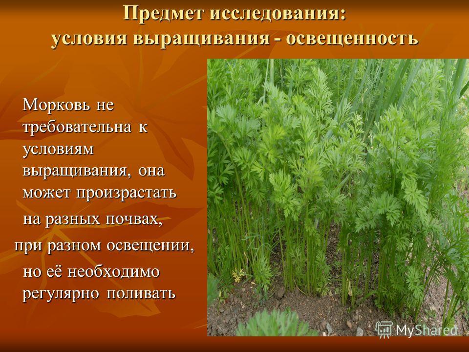 Предмет исследования: условия выращивания - освещенность Морковь не требовательна к условиям выращивания, она может произрастать на разных почвах, на разных почвах, при разном освещении, при разном освещении, но её необходимо регулярно поливать но её