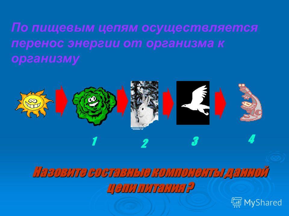 какие организмы являются паразитами выберите три