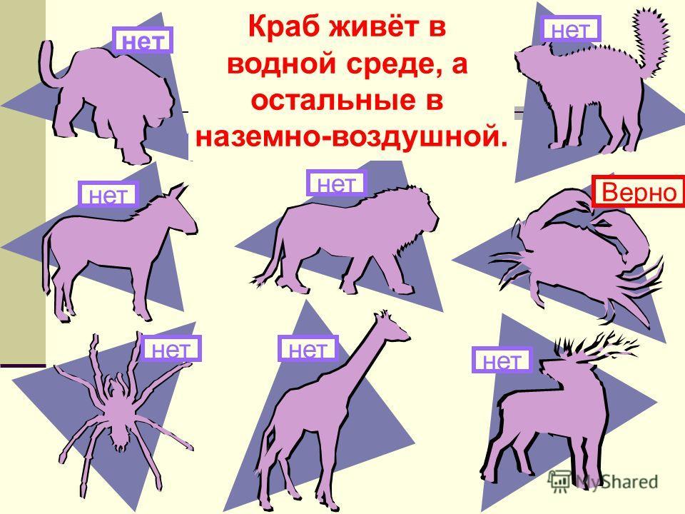 Здесь изображены животные. Какое из них живёт в другой среде обитания? нет Краб живёт в водной среде, а остальные в наземно-воздушной. нет Верно