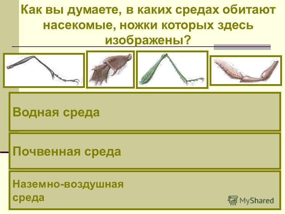 Как вы думаете, в каких средах обитают насекомые, ножки которых здесь изображены? Наземно-воздушная среда Водная среда Почвенная среда
