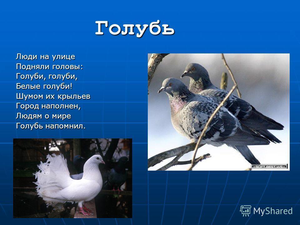 Голубь Люди на улице Подняли головы: Голуби, голуби, Белые голуби! Шумом их крыльев Город наполнен, Людям о мире Голубь напомнил.