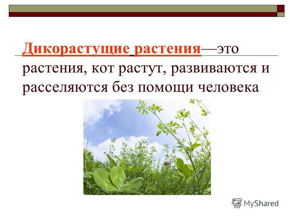 Дикорастущие растенияэто растения, кот растут, развиваются и расселяются без помощи человека