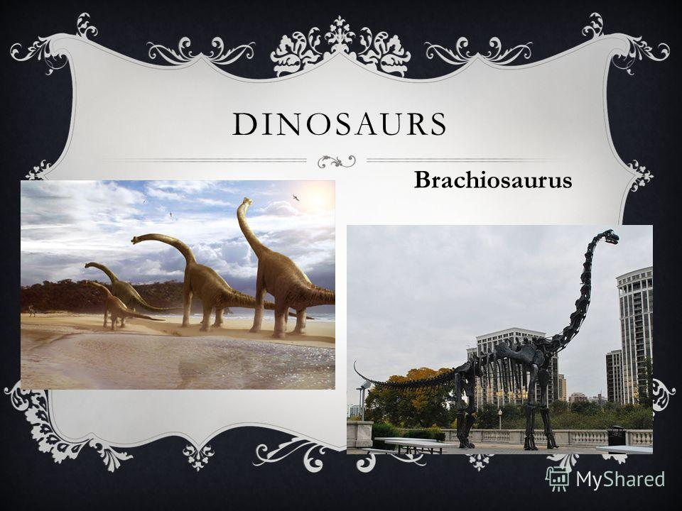 DINOSAURS Brachiosaurus