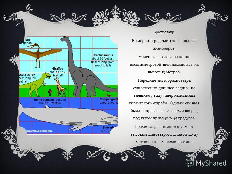 Брахиозавр. Вымерший род растительноядных динозавров. Маленькая голова на конце восьмиметровой шеи находилась на высоте 13 метров. Передние ноги брахиозавра существенно длиннее задних, по внешнему виду ящер напоминал гигантского жирафа. Однако его ше