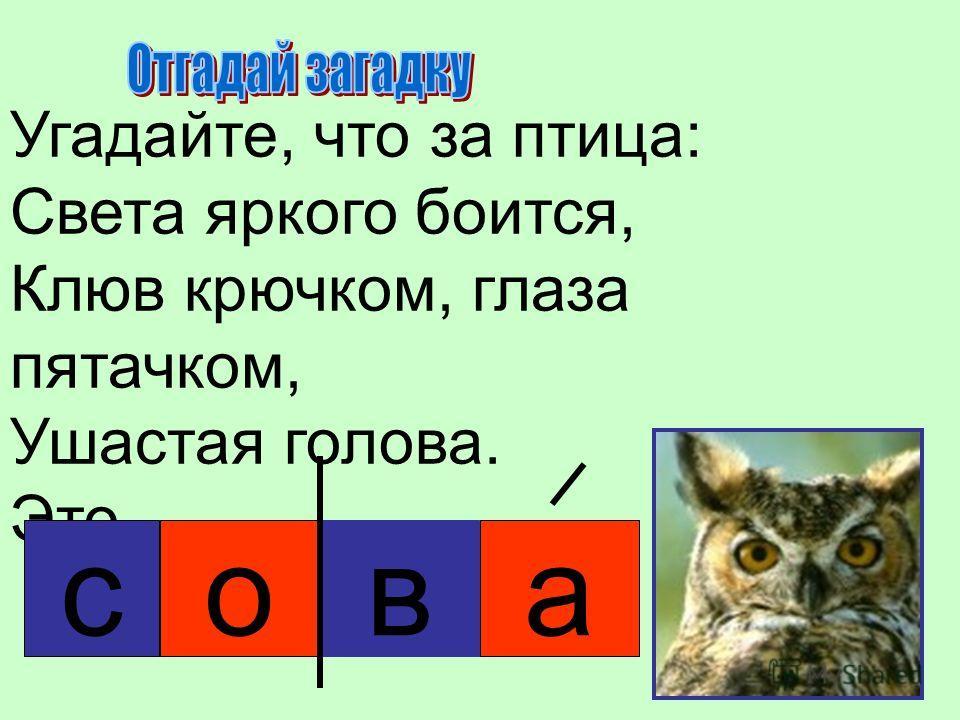 Угадайте, что за птица: Света яркого боится, Клюв крючком, глаза пятачком, Ушастая голова. Это… сова