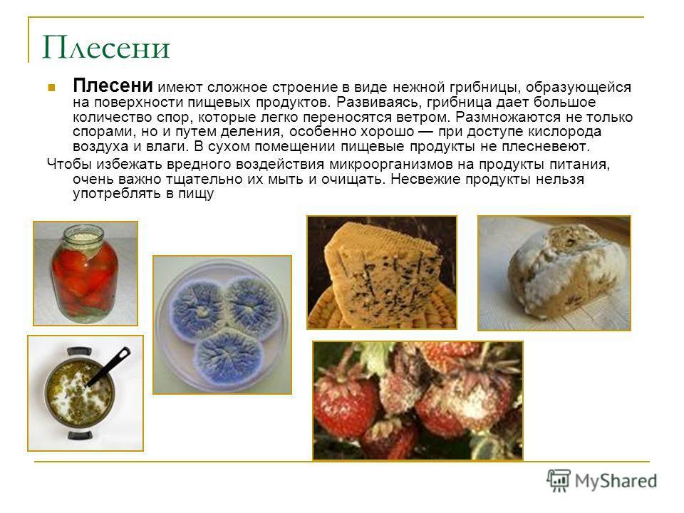 Плесени Плесени имеют сложное строение в виде нежной грибницы, образующейся на поверхности пищевых продуктов. Развиваясь, грибница дает большое количество спор, которые легко переносятся ветром. Размножаются не только спорами, но и путем деления, осо