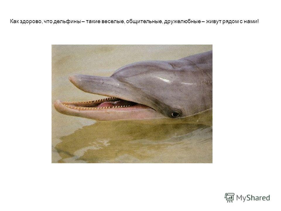 Как здорово, что дельфины – такие веселые, общительные, дружелюбные – живут рядом с нами!