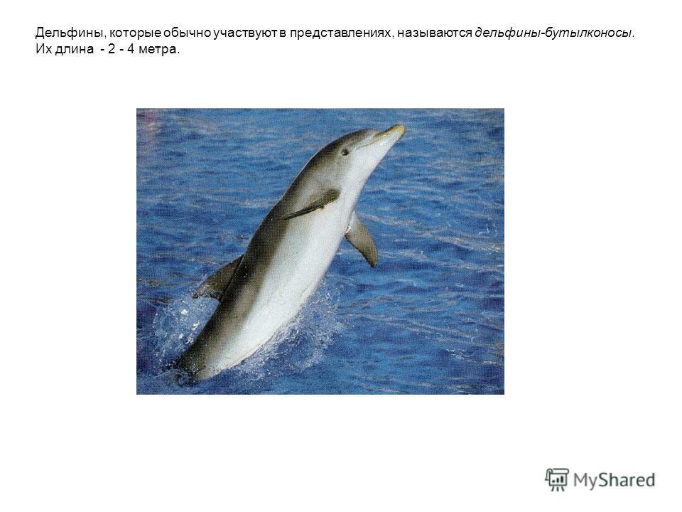Дельфины, которые обычно участвуют в представлениях, называются дельфины-бутылконосы. Их длина - 2 - 4 метра.