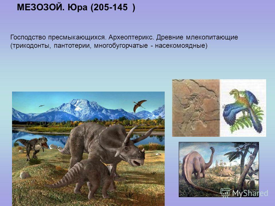 МЕЗОЗОЙ. Юра (205-145 ) Господство пресмыкающихся. Археоптерикс. Древние млекопитающие (трикодонты, пантотерии, многобугорчатые - насекомоядные)