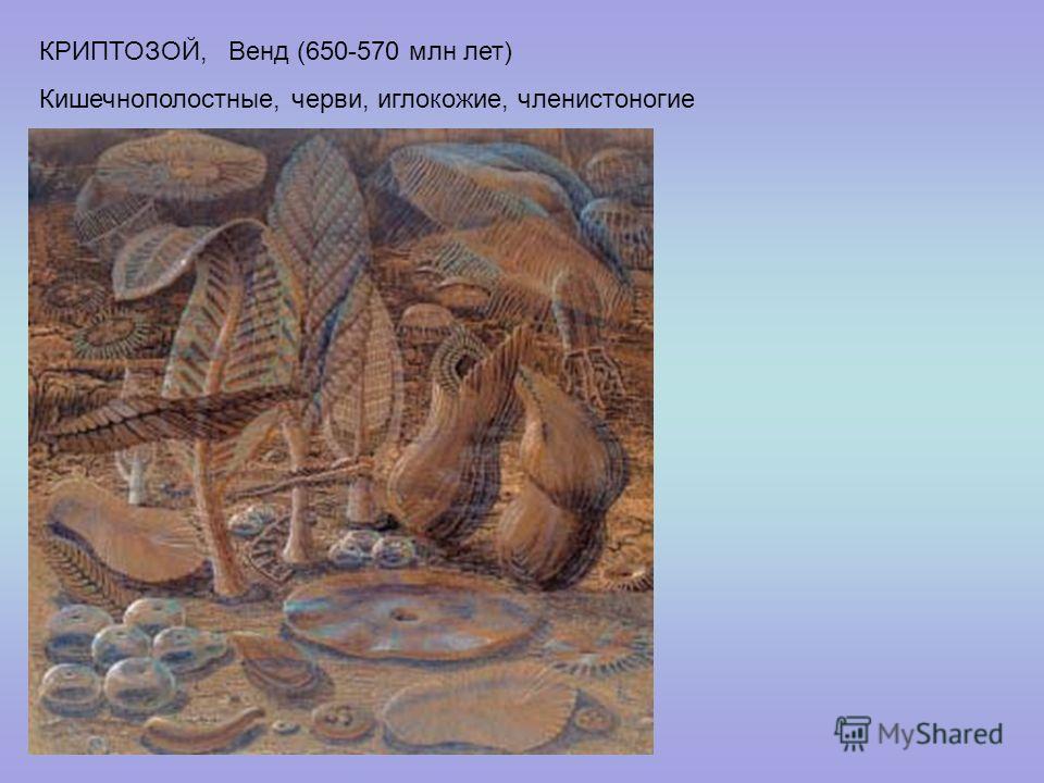 КРИПТОЗОЙ, Венд (650-570 млн лет) Кишечнополостные, черви, иглокожие, членистоногие