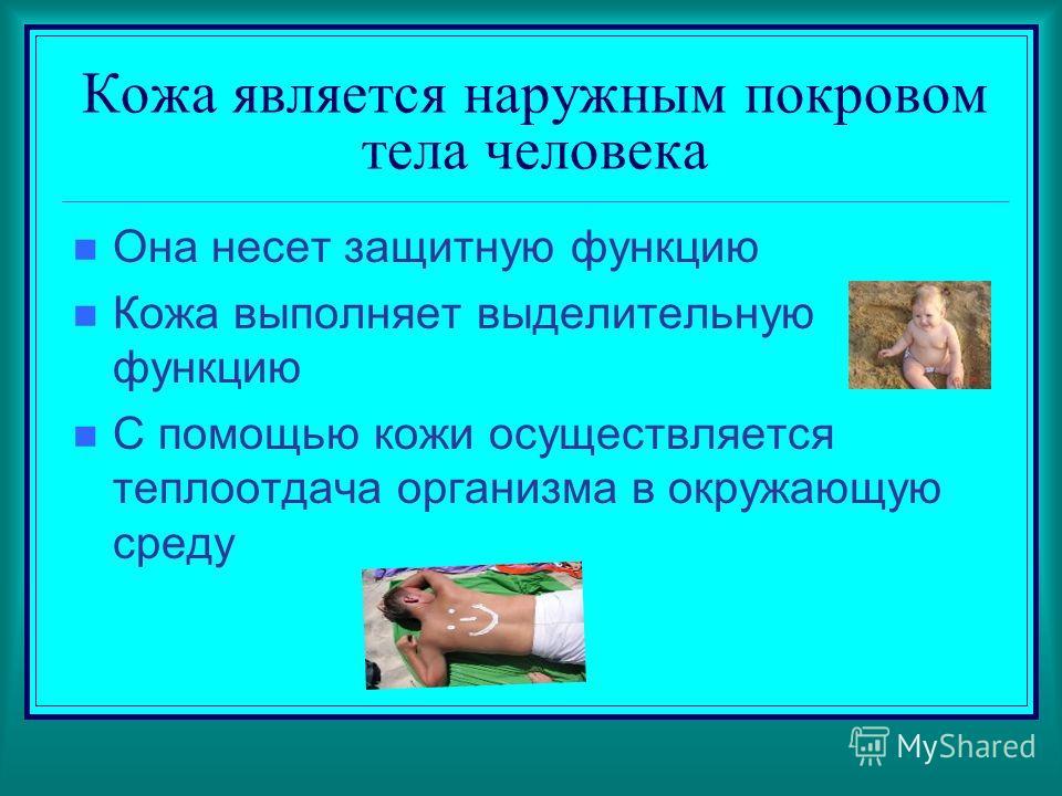 Кожа является наружным покровом тела человека Она несет защитную функцию Кожа выполняет выделительную функцию С помощью кожи осуществляется теплоотдача организма в окружающую среду