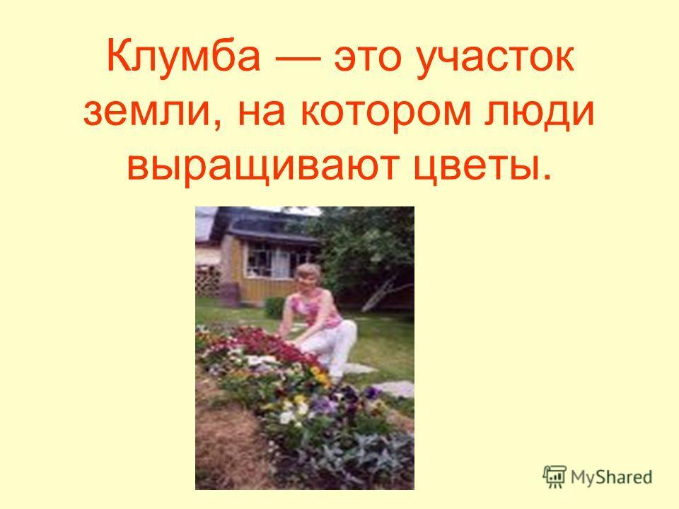 Клумба это участок земли, на котором люди выращивают цветы.