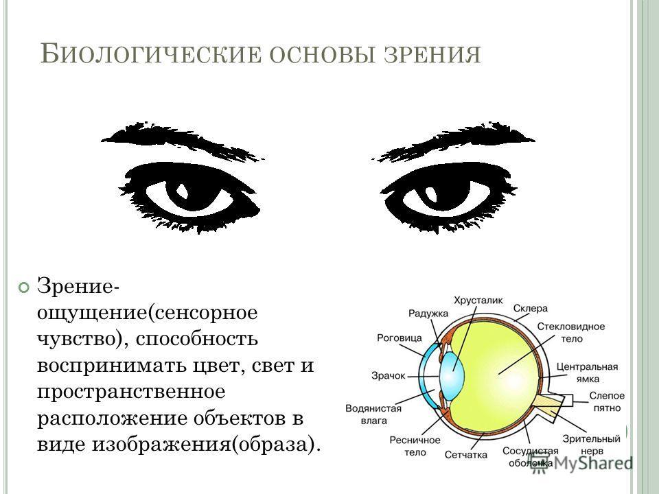 Б ИОЛОГИЧЕСКИЕ ОСНОВЫ ЗРЕНИЯ Зрение- ощущение(сенсорное чувство), способность воспринимать цвет, свет и пространственное расположение объектов в виде изображения(образа).