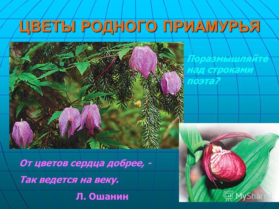 ЦВЕТЫ РОДНОГО ПРИАМУРЬЯ От цветов сердца добрее, - Так ведется на веку. Л. Ошанин Поразмышляйте над строками поэта?