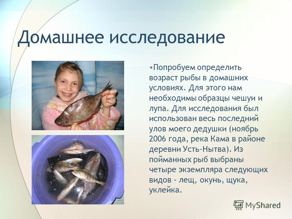 Домашнее исследование Попробуем определить возраст рыбы в домашних условиях. Для этого нам необходимы образцы чешуи и лупа. Для исследования был использован весь последний улов моего дедушки (ноябрь 2006 года, река Кама в районе деревни Усть-Нытва).