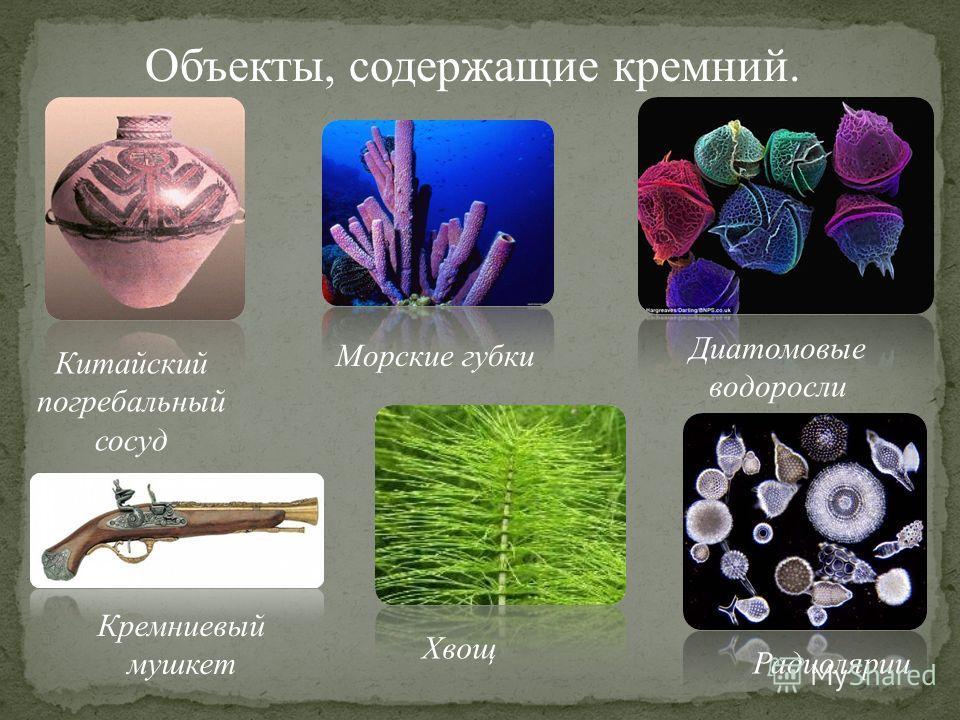 Объекты, содержащие кремний. Китайский погребальный сосуд Кремниевый мушкет Морские губки Диатомовые водоросли Хвощ Радиолярии