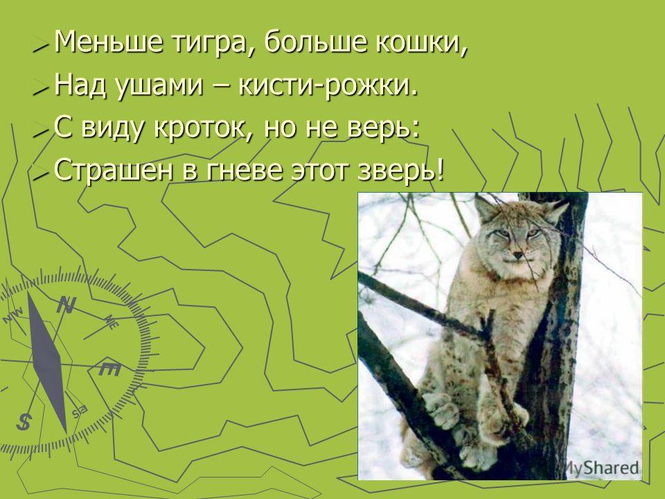 Меньше тигра, больше кошки, Меньше тигра, больше кошки, Над ушами – кисти-рожки. Над ушами – кисти-рожки. С виду кроток, но не верь: С виду кроток, но не верь: Страшен в гневе этот зверь! Страшен в гневе этот зверь!