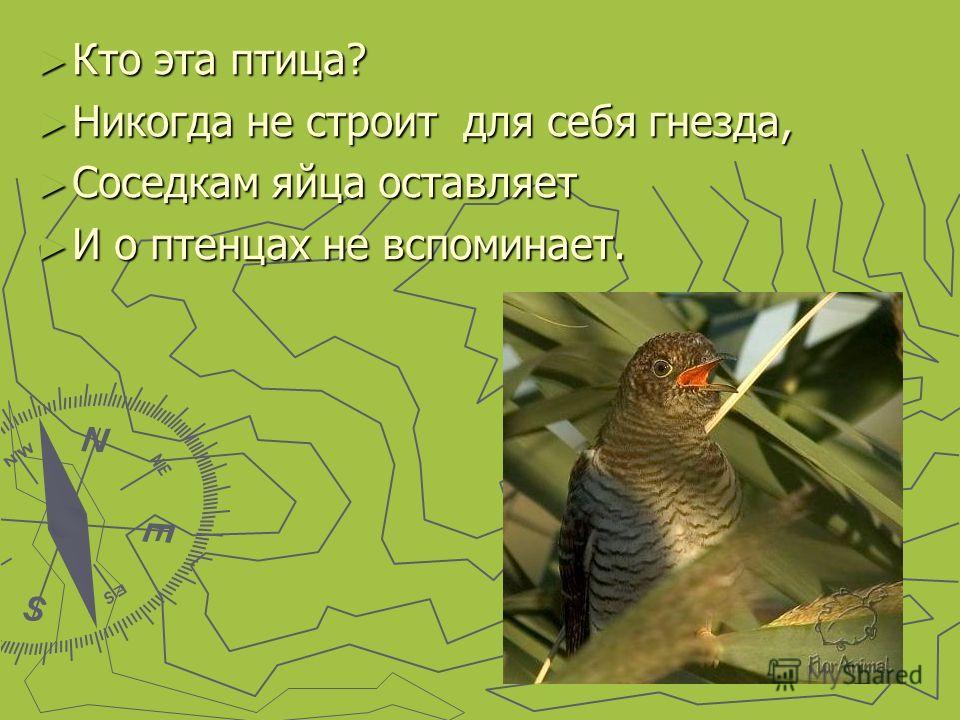Кто эта птица? Кто эта птица? Никогда не строит для себя гнезда, Никогда не строит для себя гнезда, Соседкам яйца оставляет Соседкам яйца оставляет И о птенцах не вспоминает. И о птенцах не вспоминает.