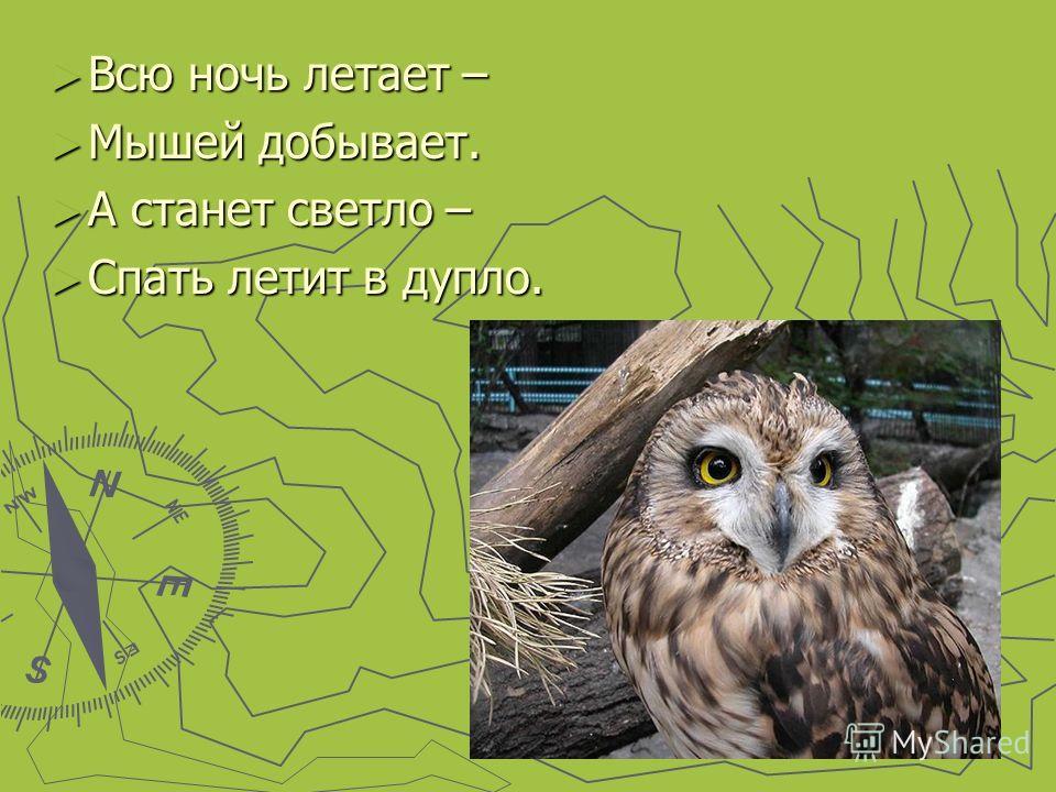Всю ночь летает – Всю ночь летает – Мышей добывает. Мышей добывает. А станет светло – А станет светло – Спать летит в дупло. Спать летит в дупло.
