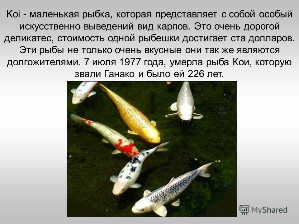 Koi - маленькая рыбка, которая представляет с собой особый искусственно выведений вид карпов. Это очень дорогой деликатес, стоимость одной рыбешки достигает ста долларов. Эти рыбы не только очень вкусные они так же являются долгожителями. 7 июля 1977