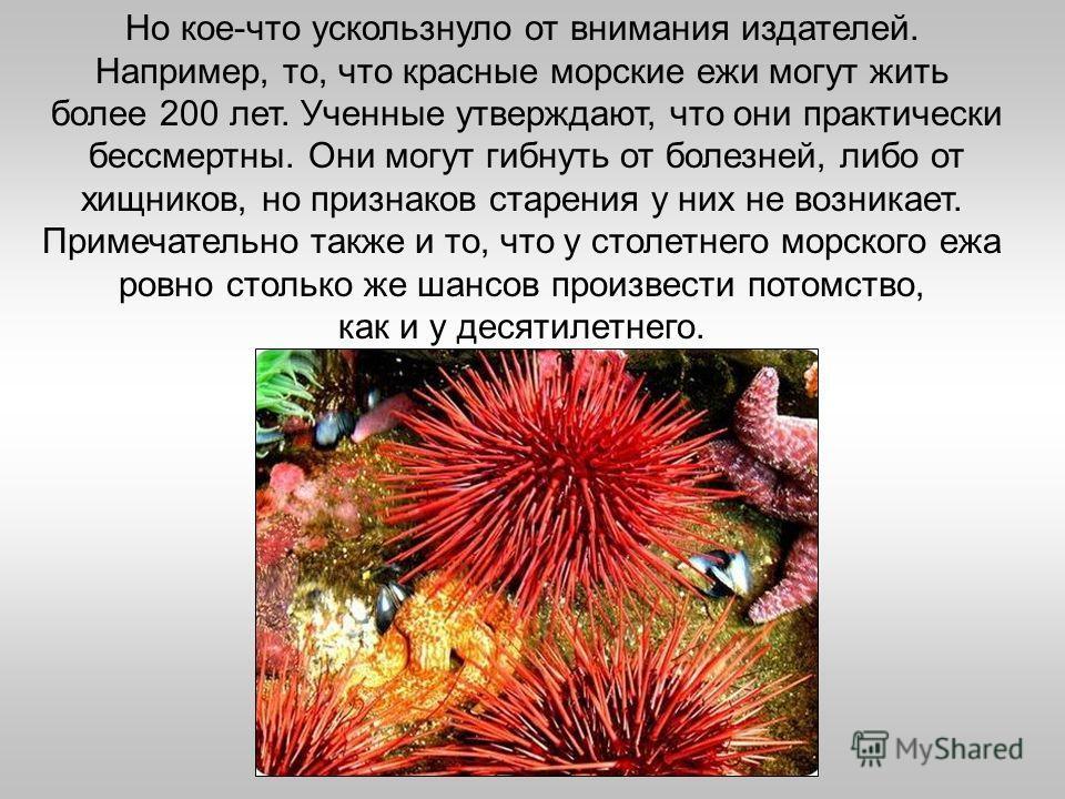 Но кое-что ускользнуло от внимания издателей. Например, то, что красные морские ежи могут жить более 200 лет. Ученные утверждают, что они практически бессмертны. Они могут гибнуть от болезней, либо от хищников, но признаков старения у них не возникае