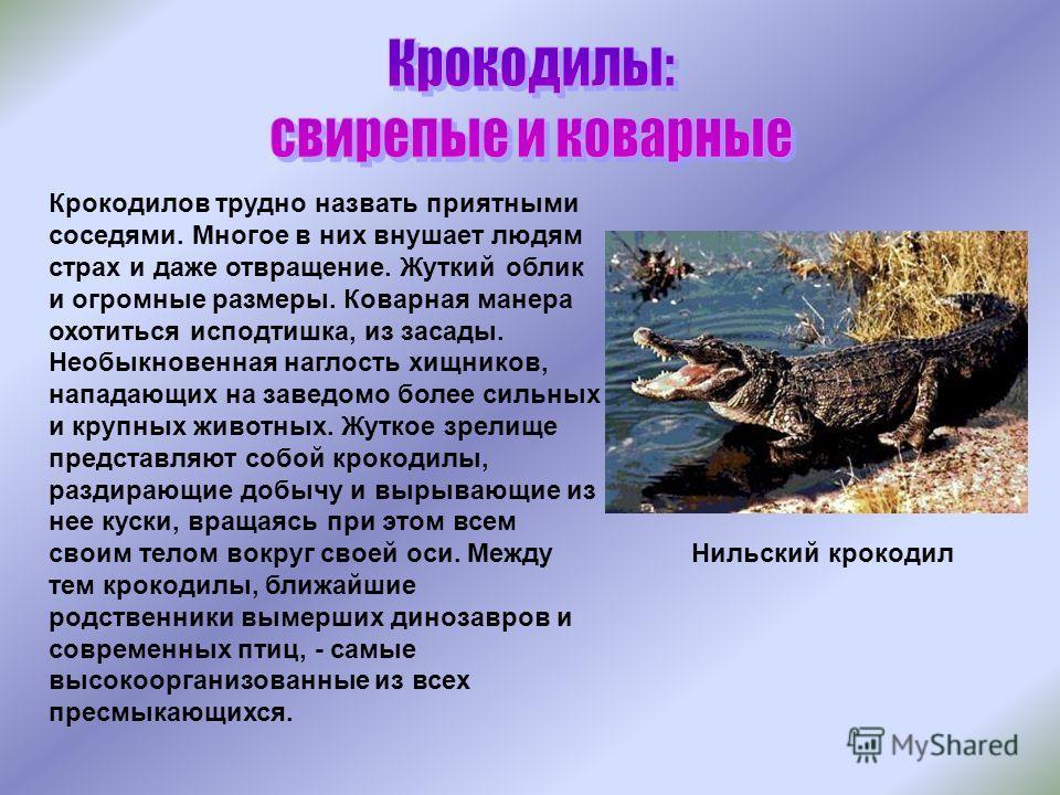 Крокодилов трудно назвать приятными соседями. Многое в них внушает людям страх и даже отвращение. Жуткий облик и огромные размеры. Коварная манера охотиться исподтишка, из засады. Необыкновенная наглость хищников, нападающих на заведомо более сильных