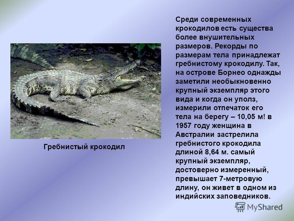 Среди современных крокодилов есть существа более внушительных размеров. Рекорды по размерам тела принадлежат гребнистому крокодилу. Так, на острове Борнео однажды заметили необыкновенно крупный экземпляр этого вида и когда он уполз, измерили отпечато