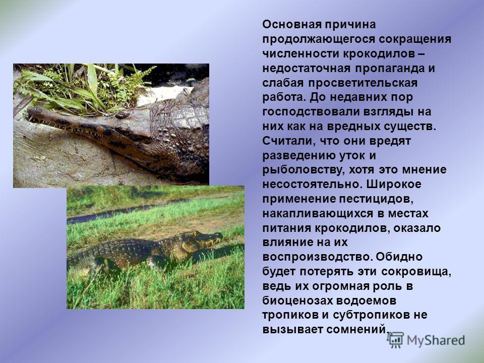 Основная причина продолжающегося сокращения численности крокодилов – недостаточная пропаганда и слабая просветительская работа. До недавних пор господствовали взгляды на них как на вредных существ. Считали, что они вредят разведению уток и рыболовств