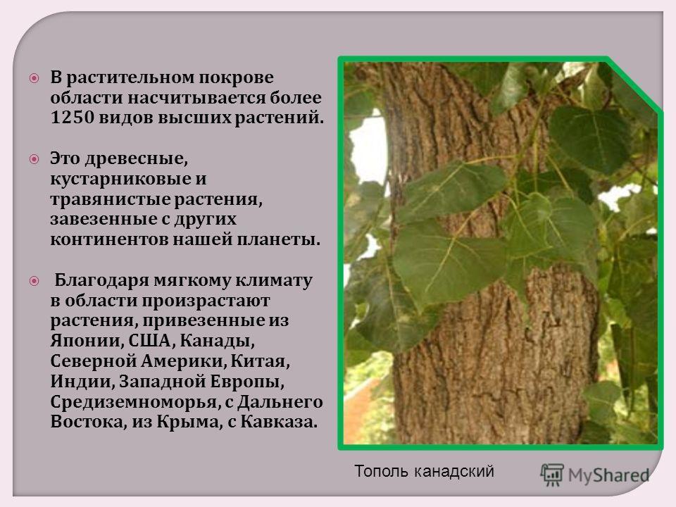 В растительном покрове области насчитывается более 1250 видов высших растений. Это древесные, кустарниковые и травянистые растения, завезенные с других континентов нашей планеты. Благодаря мягкому климату в области произрастают растения, привезенные