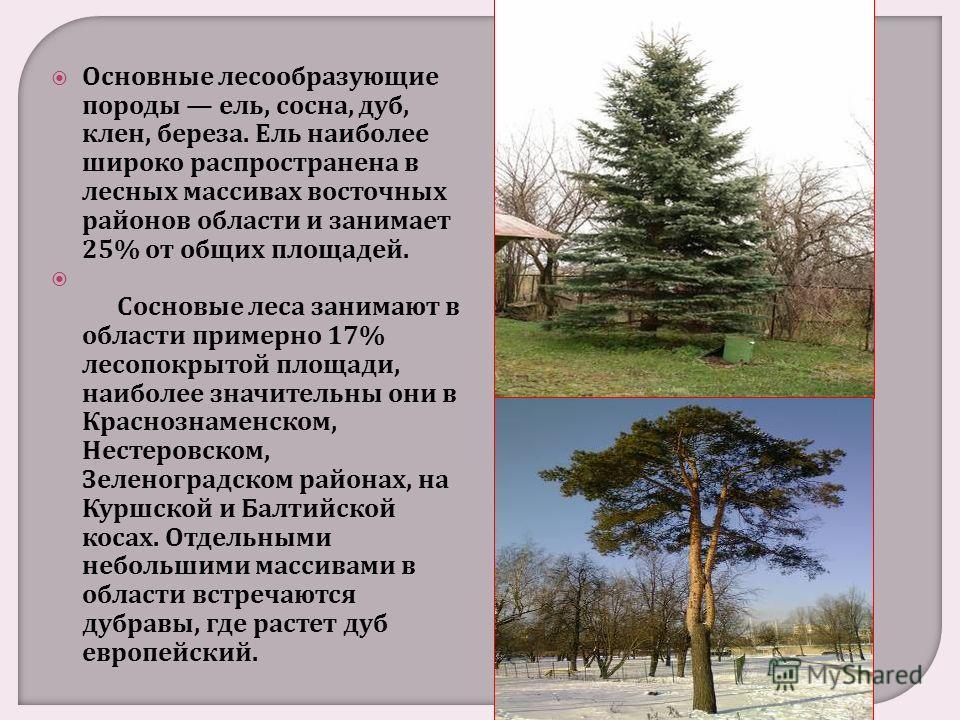 Основные лесообразующие породы ель, сосна, дуб, клен, береза. Ель наиболее широко распространена в лесных массивах восточных районов области и занимает 25% от общих площадей. Сосновые леса занимают в области примерно 17% лесопокрытой площади, наиболе