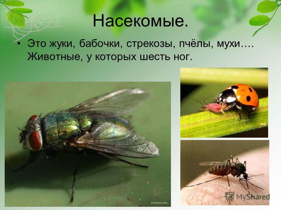 Насекомые. Это жуки, бабочки, стрекозы, пчёлы, мухи…. Животные, у которых шесть ног.