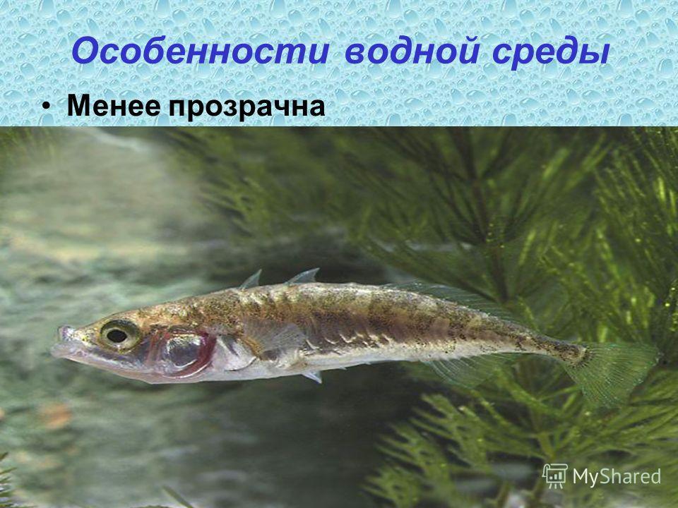 Особенности водной среды Менее прозрачна