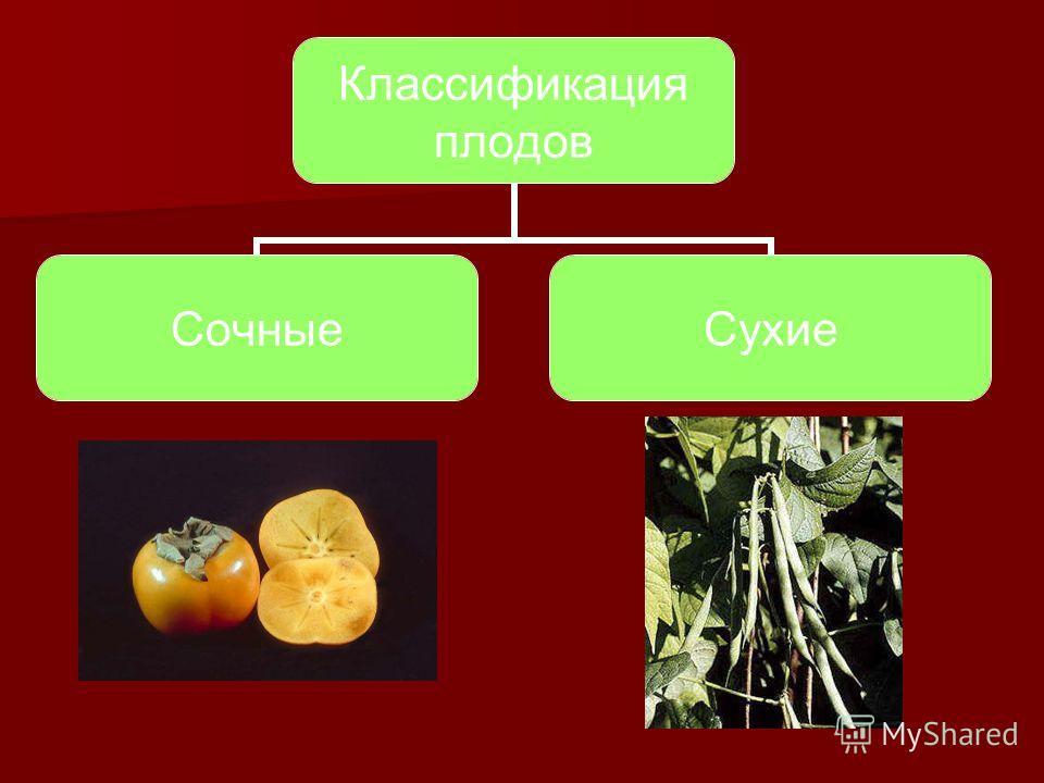 Классификация плодов СочныеСухие