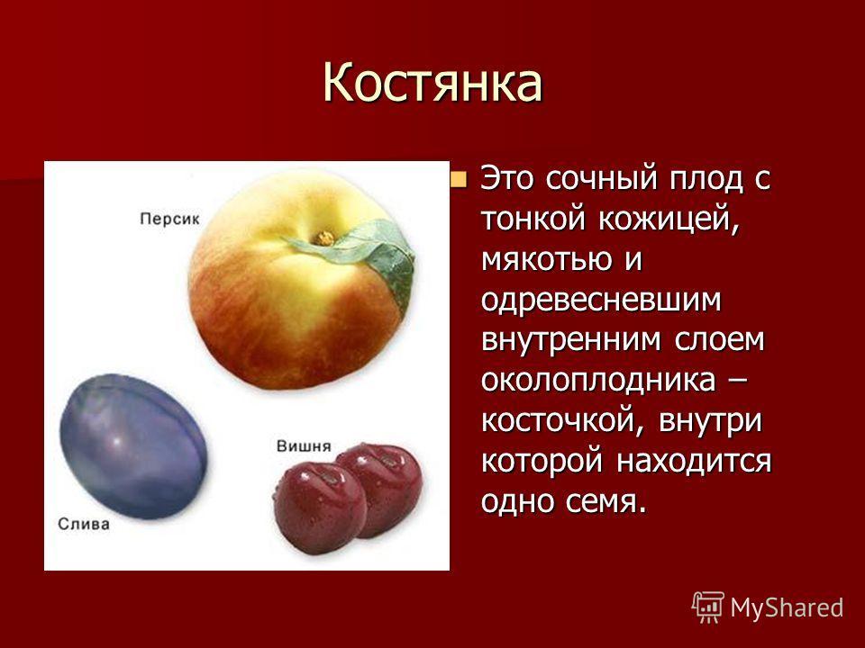 Костянка Это сочный плод с тонкой кожицей, мякотью и одревесневшим внутренним слоем околоплодника – косточкой, внутри которой находится одно семя. Это сочный плод с тонкой кожицей, мякотью и одревесневшим внутренним слоем околоплодника – косточкой, в