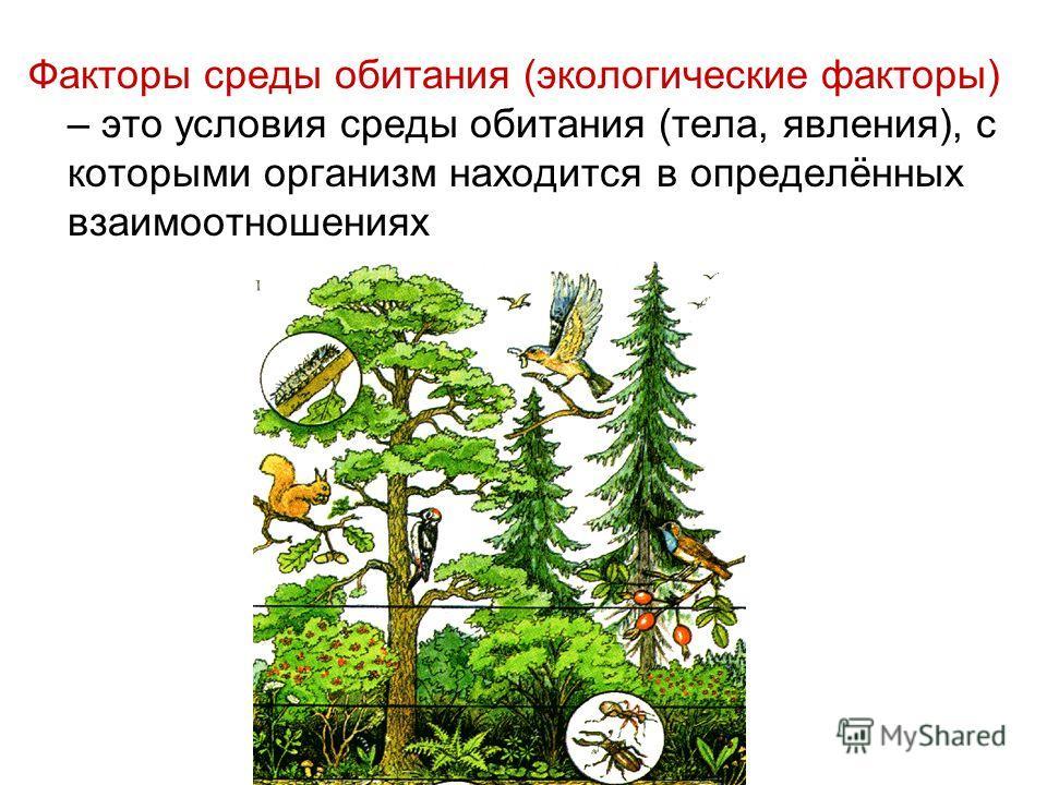 Факторы среды обитания (экологические факторы) – это условия среды обитания (тела, явления), с которыми организм находится в определённых взаимоотношениях