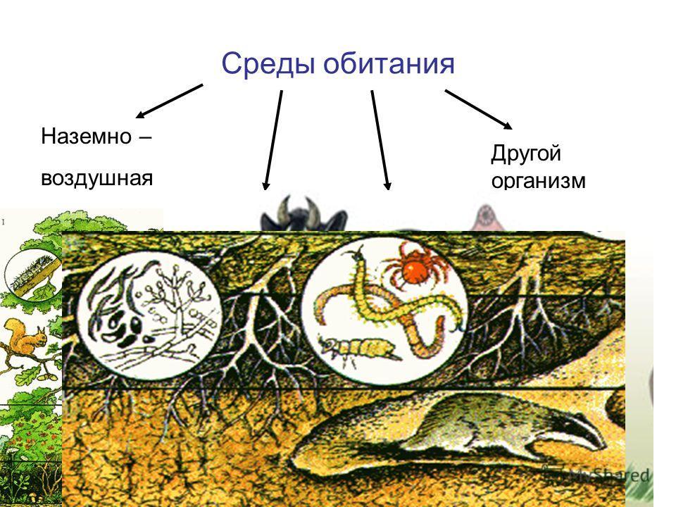 Среды обитания Наземно – воздушная ПочвеннаяВодная Другой организм