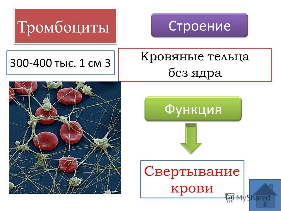 Тромбоциты Кровяные тельца без ядра Строение Функция Свертывание крови 300-400 тыс. 1 см 3