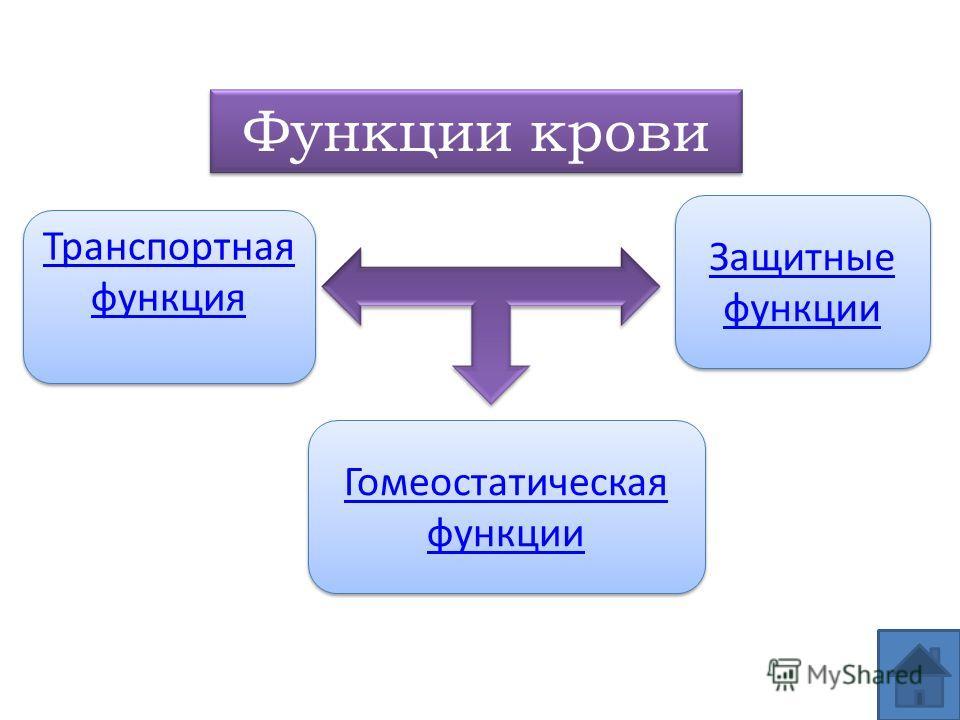 Функции крови Транспортная функция Транспортная функция Защитные функции Защитные функции Гомеостатическая функции Гомеостатическая функции