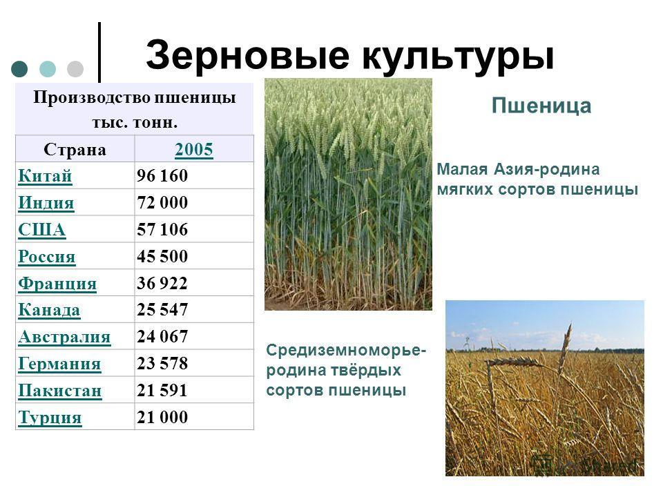 Основные районы выращивания ржи 35