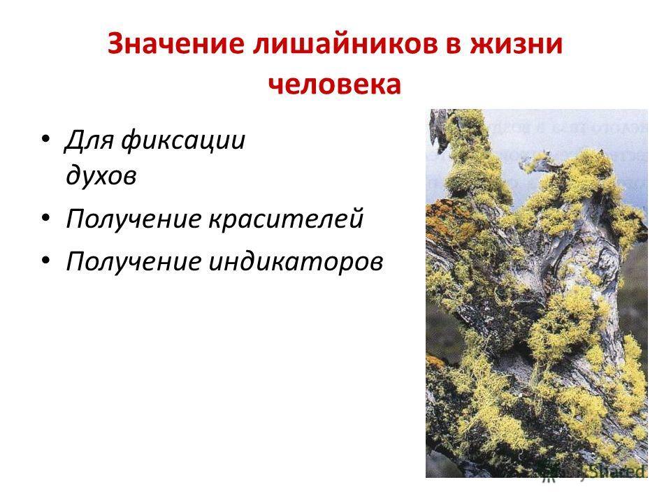 Значение лишайников в жизни человека Для фиксации запаха духов Получение красителей Получение индикаторов