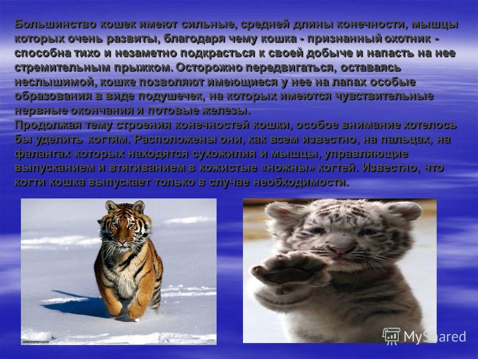 Большинство кошек имеют сильные, средней длины конечности, мышцы которых очень развиты, благодаря чему кошка - признанный охотник - способна тихо и незаметно подкрасться к своей добыче и напасть на нее стремительным прыжком. Осторожно передвигаться,