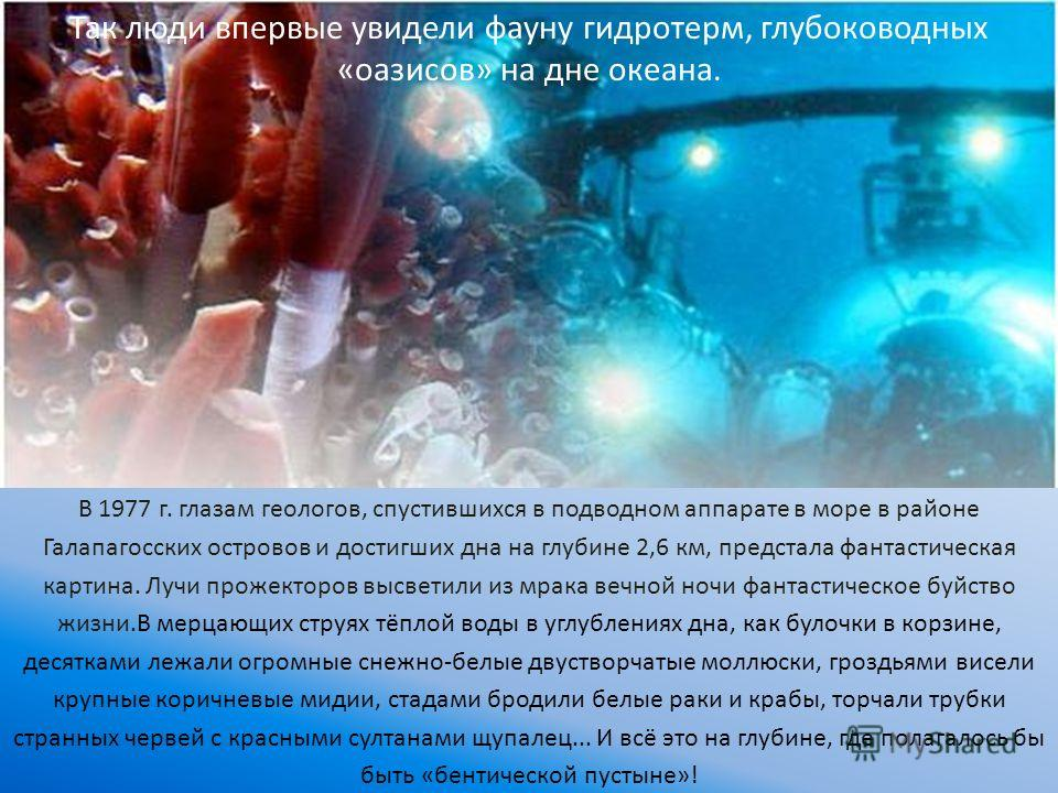 В 1977 г. глазам геологов, спустившихся в подводном аппарате в море в районе Галапагосских островов и достигших дна на глубине 2,6 км, предстала фантастическая картина. Лучи прожекторов высветили из мрака вечной ночи фантастическое буйство жизни.В ме